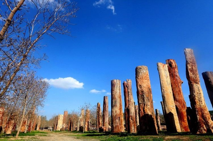 新疆古生態園1