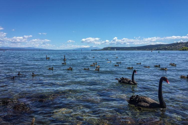Great Lake Taupo1