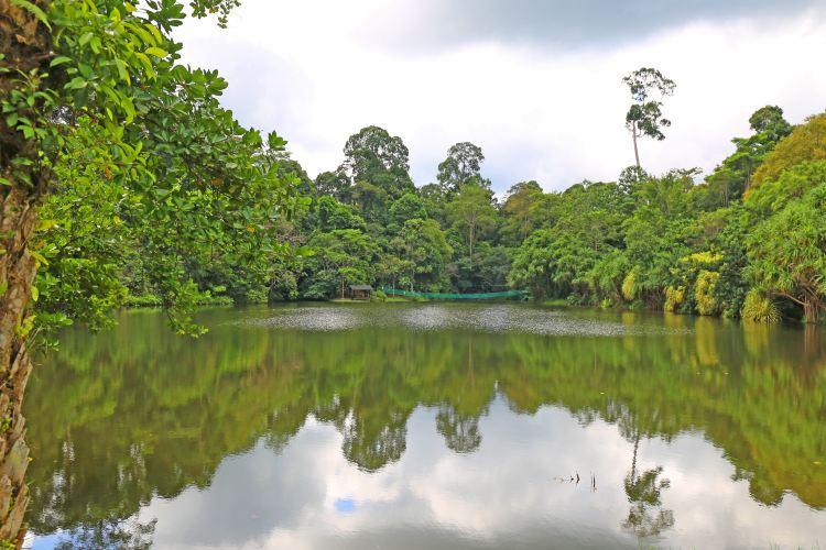 山打根雨林探索中心1