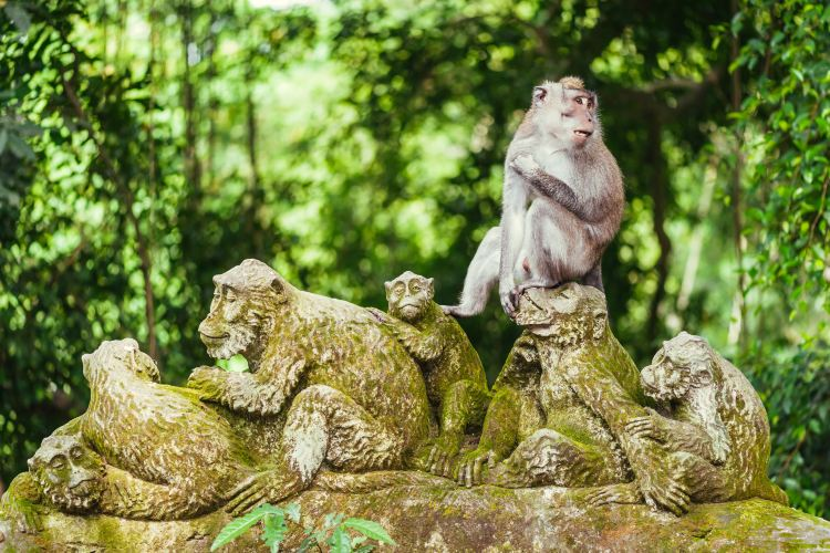 Ubud Monkey Forest2