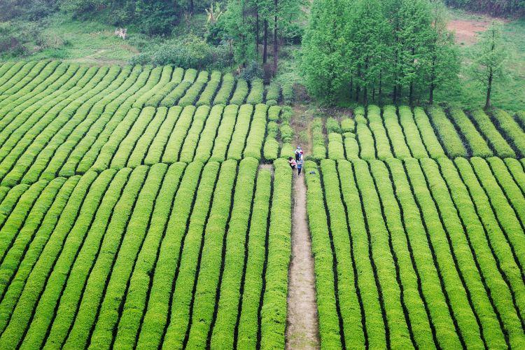中國茶海景區4