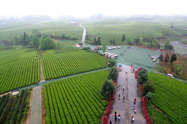 中國茶海景區1