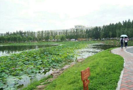 觀瀾湖公園
