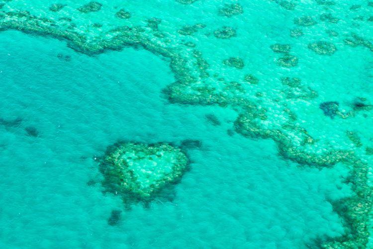 心形大堡礁4