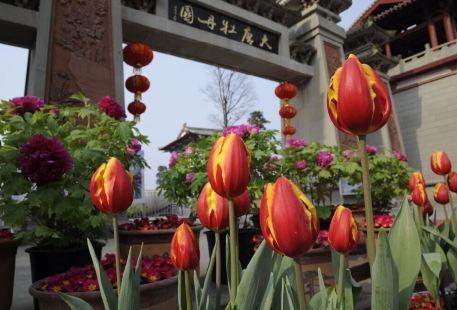 Datang Peony Garden (Northeast Gate)