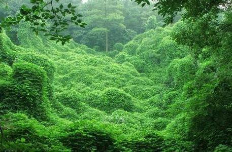 Taoyuanjian North Long