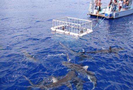 水底鯊魚觀光活動