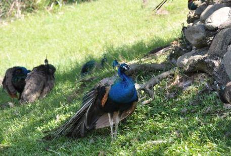 Peacock's Park