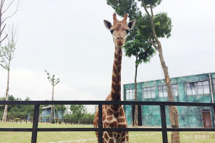Huai'an Zoo