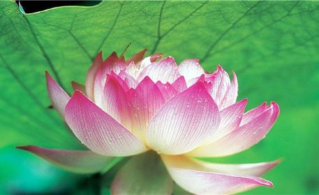 Furong Guoli Junshan Yesheng Lotus World