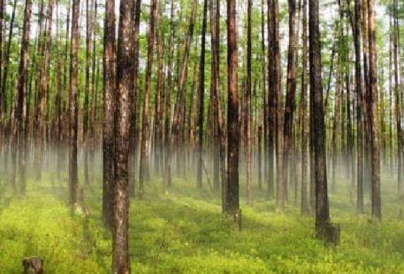 Dilongcun Yuanshi Forest