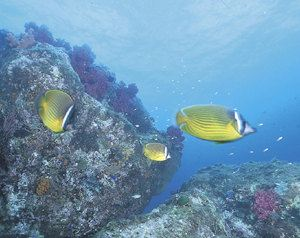 竹島海底公園