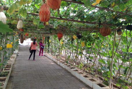 Beidaihe Ji Fa Ecology Tourism Leisure Amusement Park