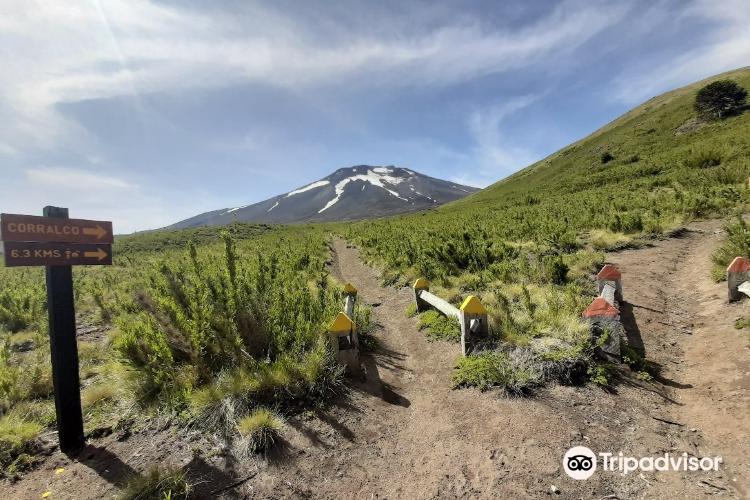 Reserva Nacional Malalcahuello2