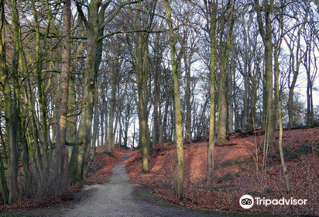 Reichswald