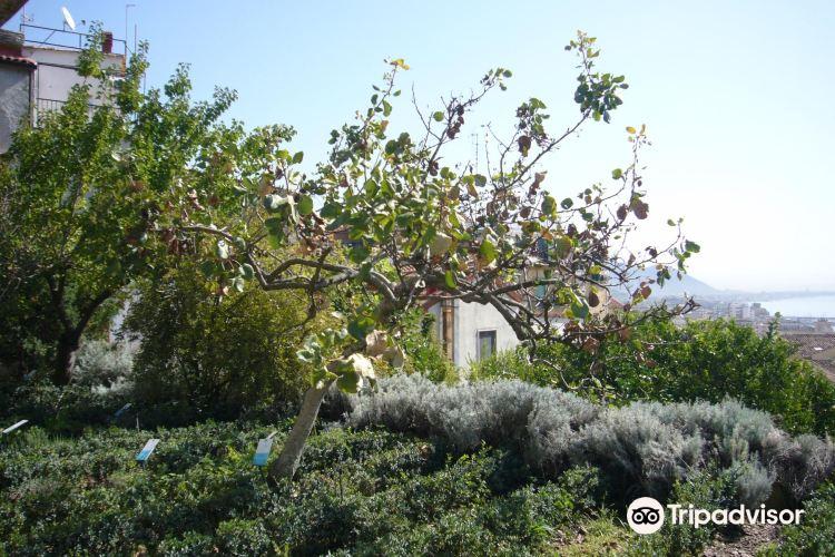 Minerva's Garden3
