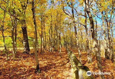 Thacher State Park (John Boyd Thacher)