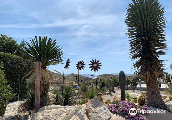 Cactus Nijar2