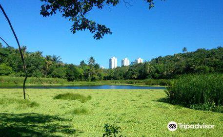 Pituacu Metropolitan park