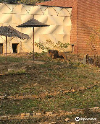 索菲亞動物園2