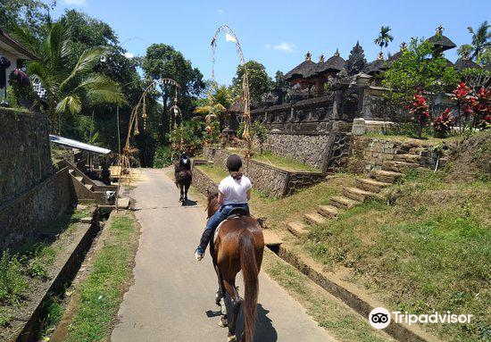 Ubud Horse Stables1