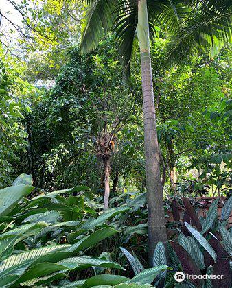ホアキン・アントニオ・ウリベ植物園3