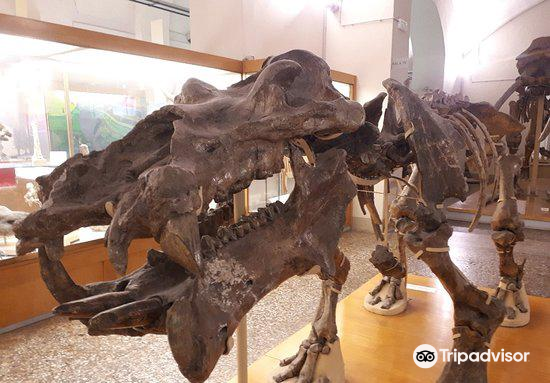 University of Florence Natural History Museum4