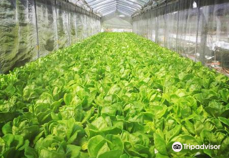 Oh Chin Huat Hydroponic Farms