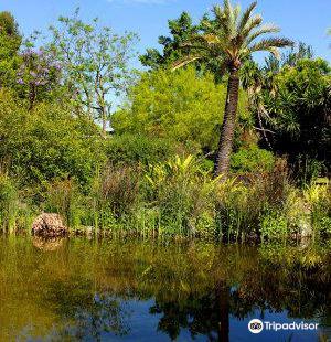 Jardin Botanico El Arboreto