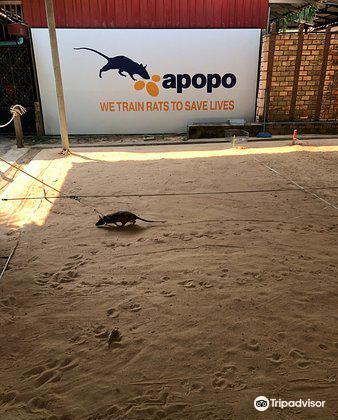 APOPO Visitor Center4
