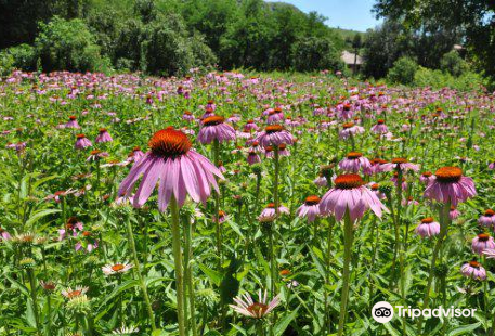 Szentabrahami Organic herb garden