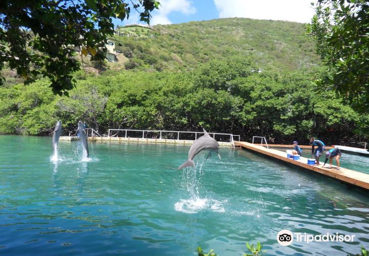 Dolphin Discovery Tortola1