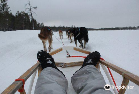 Extreme Huskies
