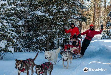 Alaskan Adventure Dog Sledding