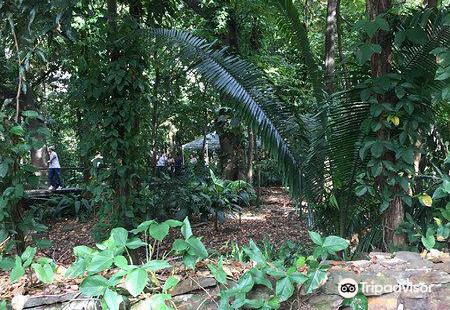 Jardin Botanico Medellin