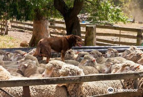 Yallingup Shearing Shed