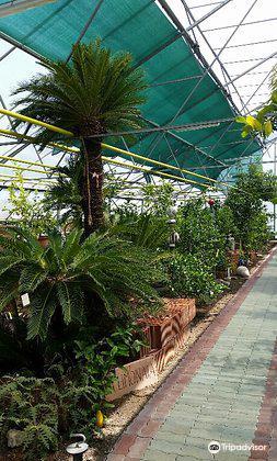Der Zitrusgarten2