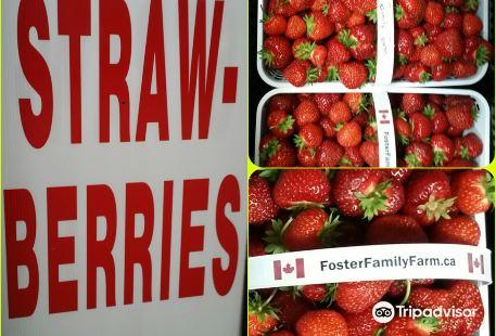 Foster Family Farm