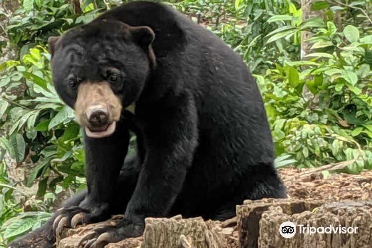 婆羅洲太陽熊保育中心4