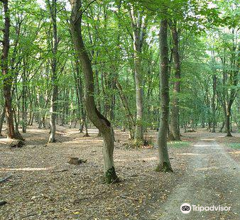 Hoia Baciu Forest