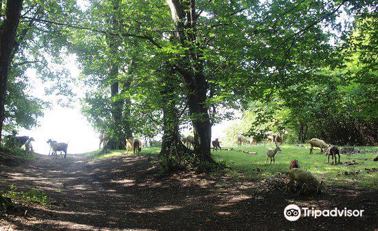 Hoia Baciu Forest1