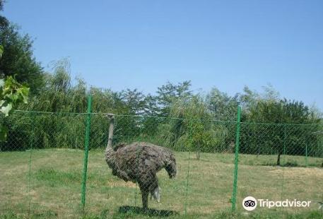 Zoo Parc Calarasi