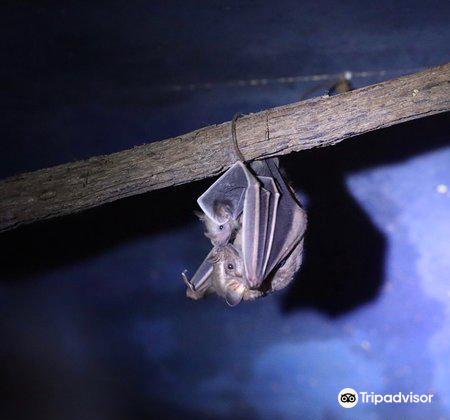 The Bat Jungle4