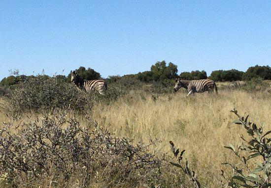 Mafikeng Game Reserve3