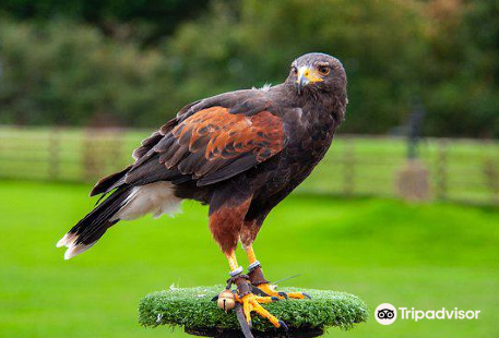 Hawkridge Bird of Prey Centre