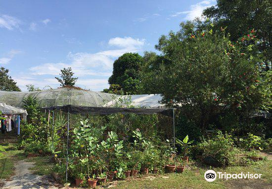 Oh Chin Huat Hydroponic Farms2