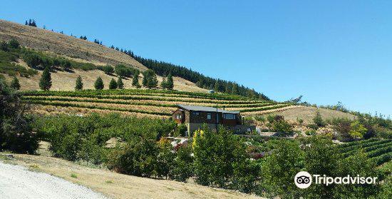 Clyde Village Vineyard