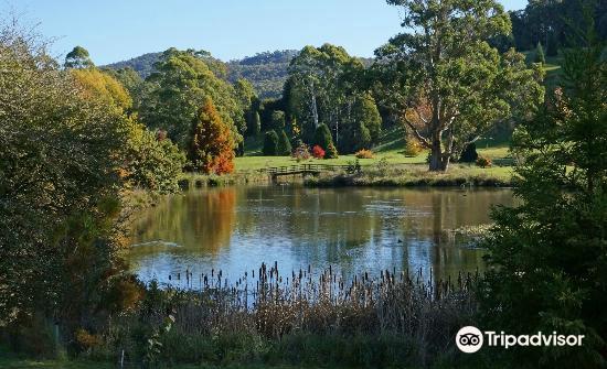 The Tasmanian Arboretum4