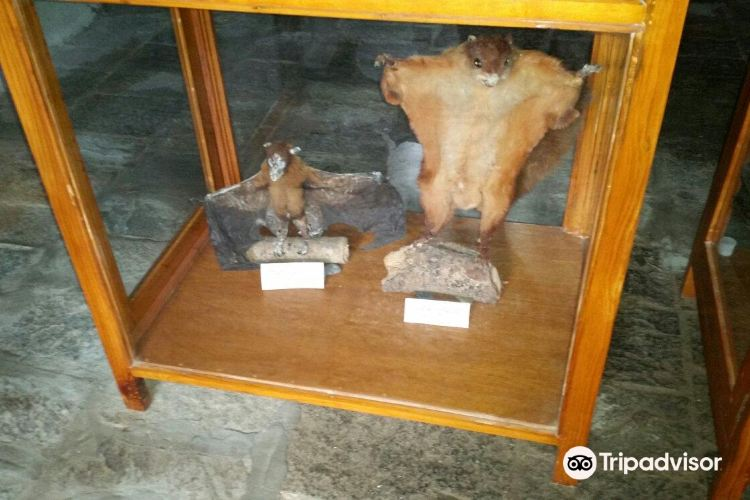 Annapurna Butterfly Museum4
