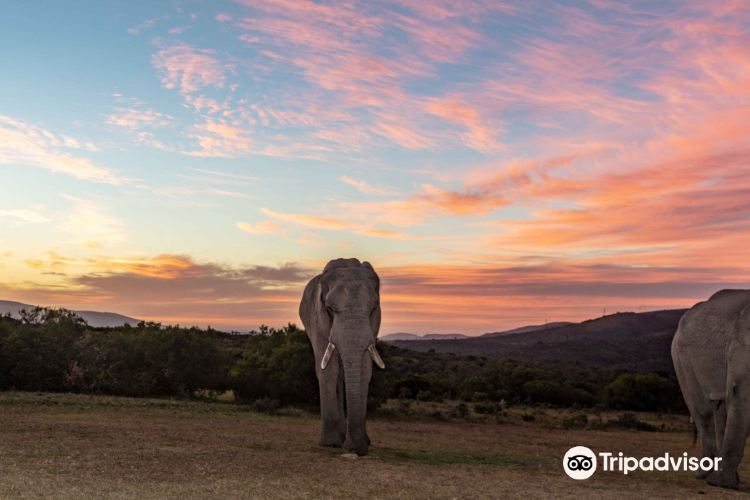 Addo Elephant-Back Safaris and Lodge1